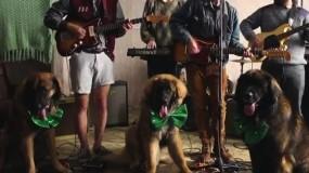 Nuevo vídeo Real Estate – It's Real, solo falta el encantador de perros