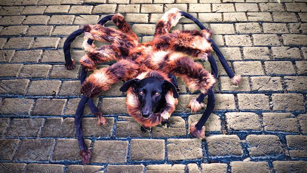 Perro araña mutante - Los vídeos más vistos de Youtube en 2014